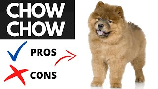 Chow Chow Pros And Cons | The Good AND The Bad!!