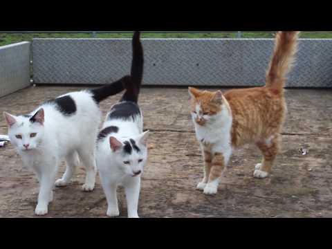 Brook Farm Animal Sanctuary Over Run With Cats!?