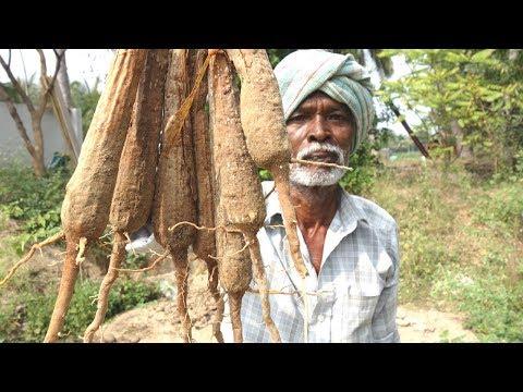 Fresh Palm Sprouts Traditional Food Recipes | Panam Kizhangu | VILLAGE FOOD