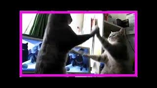 Katzen Backe Backe Kuchen