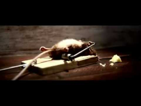 Mouse Trap Survivor Cheese Commercial