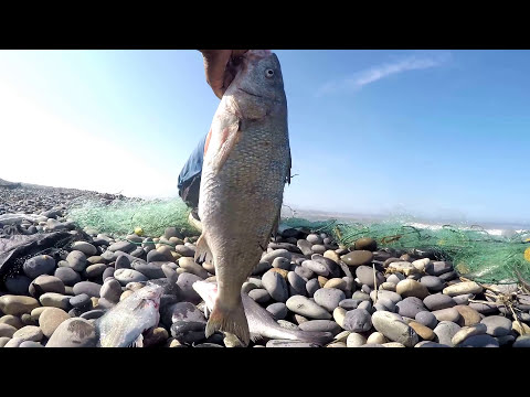 Fishing with net | Shore fishery with net