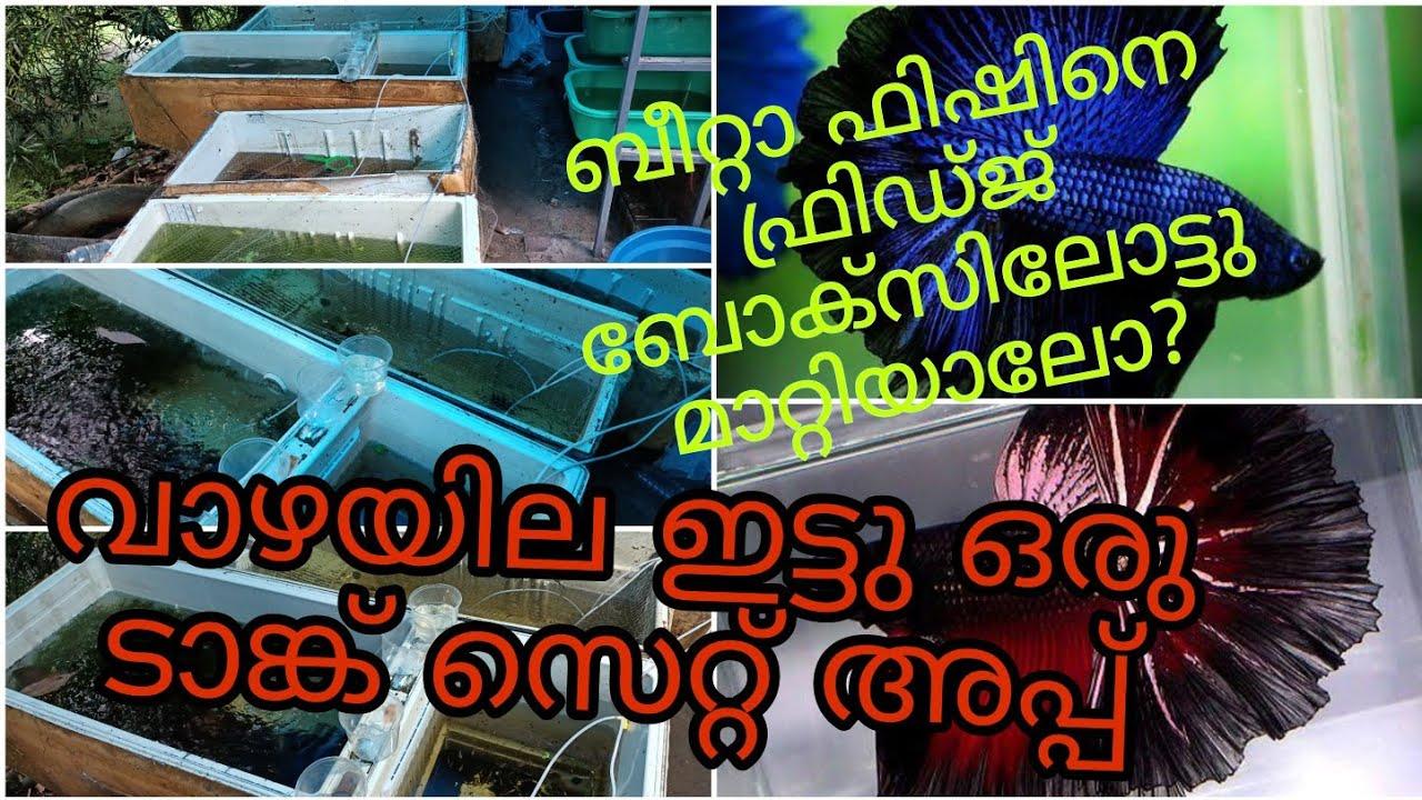 Bettafish tank setup|how to fast growth bettafish malayalam |betta fry care