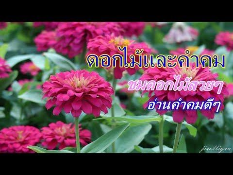 ดอกไม้และคำคม EP1