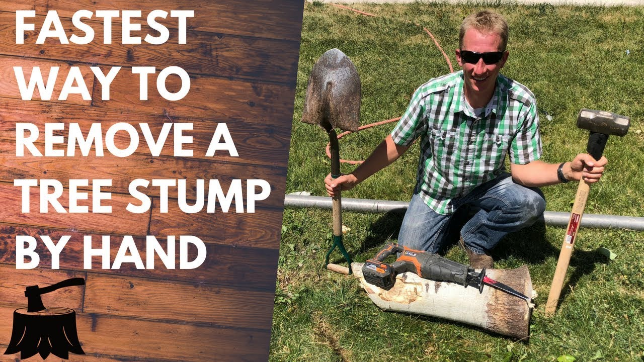 How To Remove A Tree Stump By Hand In 20 Minutes Or Less