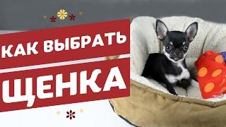 Как выбрать щенка / Советы начинающим собаководам от pethouse