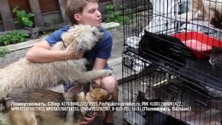 Ремонтируем приют для бездомных животных Дари добро