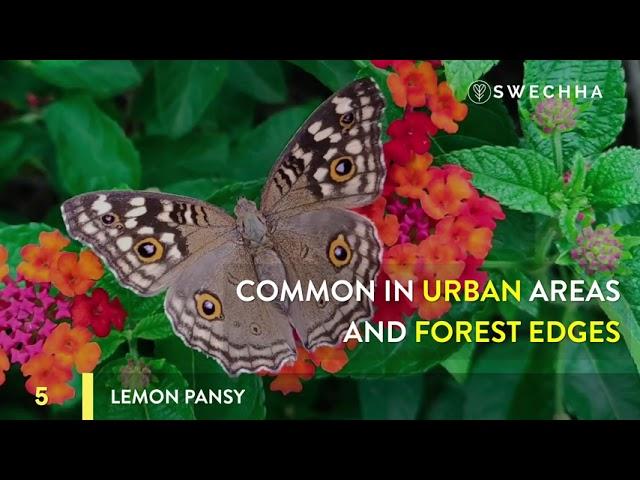 Ten Common Butterflies of Delhi