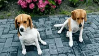 Mijn hondjes Indy & Zoë