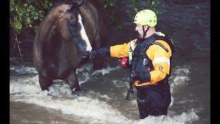 ハリケーン・ハービーによる洪水で取り残されたウマを救助