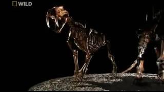 Prehistoric Predators  Episode 2 Sabertooth