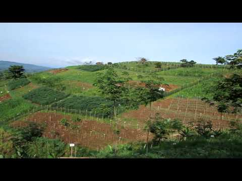 Conservation Agriculture in the Philippines