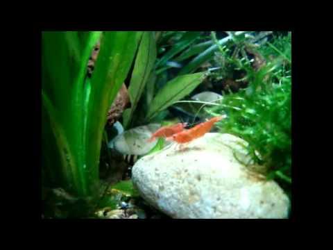 Part 1   22 litre Nano Aquarium tank design   all natural