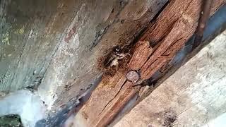 semut yg kompak hingga gotong royong