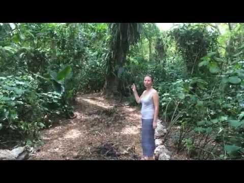 Our Jungle on Espiritu Santo Vanuatu