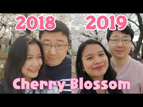 Festival Cherry Blossom Korea 2019 🌸💑🌸 Korea Indonesia Couple