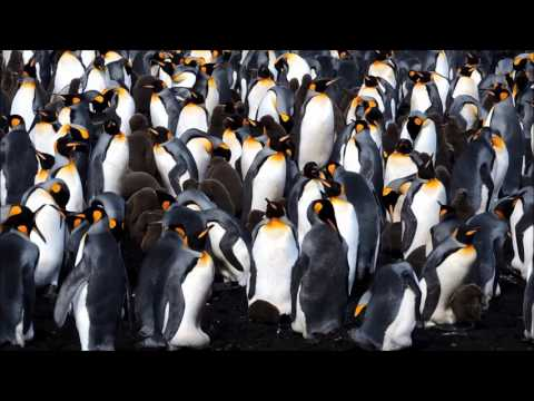 Volunteer Point penguins