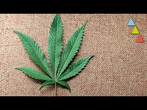 Qu� le ocurre a tu cuerpo cuando fumas marihuana