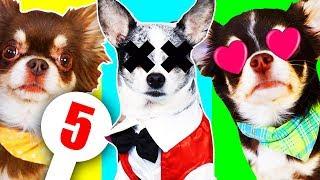 видео Смотрите на странную реакцию собаки на вопрос хозяйки