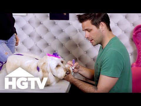 A Day At A Luxury Dog Hotel - See J Work - HGTV