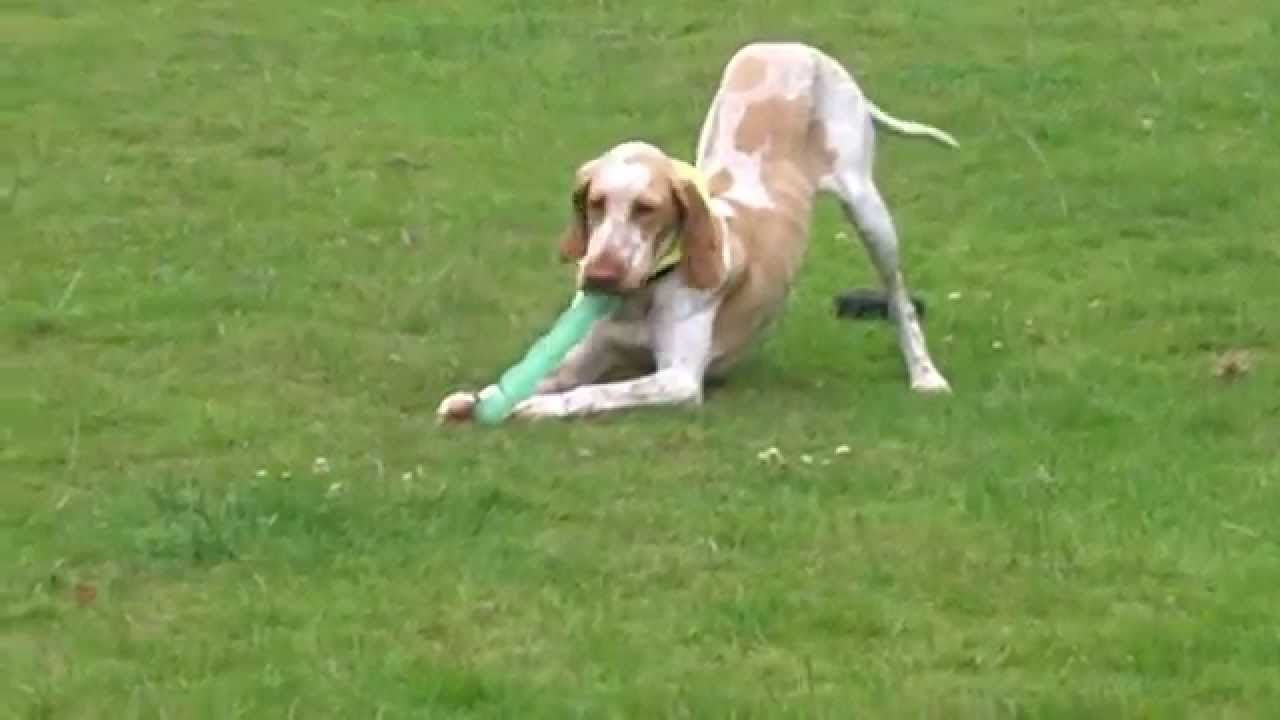 Dog Kennels Worcestershire