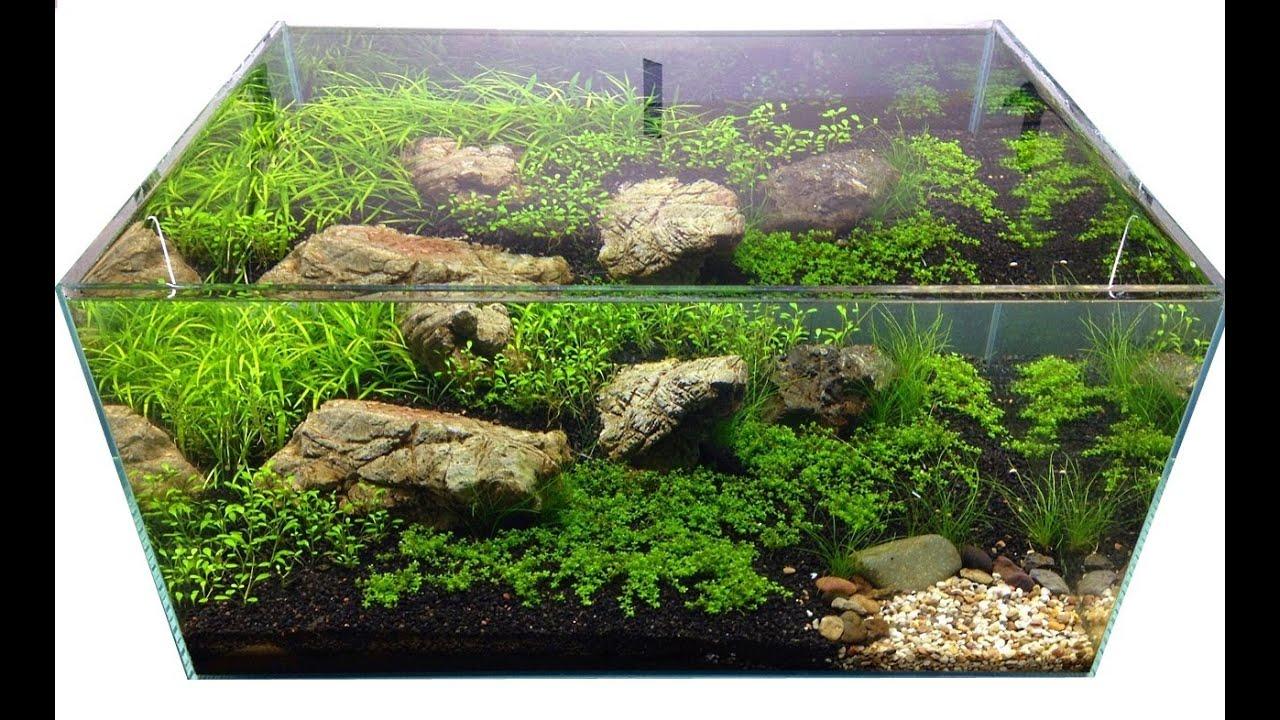 Carpet Plants from Aquarium Gardens - YouTube