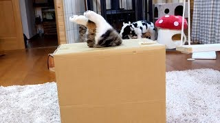入れたけど出られないねこ-maru-could-get-into-it-but-couldn-t-get-out