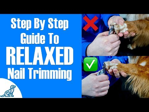 How To Clip Dog Nails - Professional Dog Training Tips