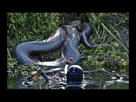 World's biggest snake found alive in Mexico