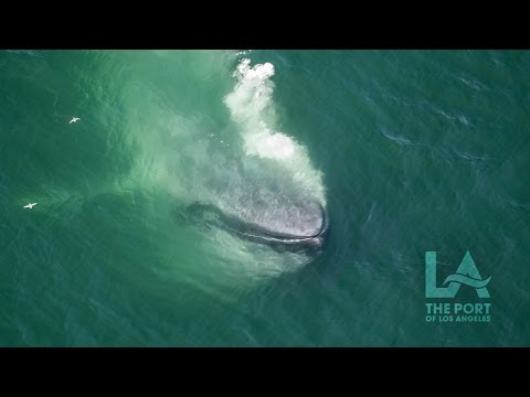 Whale Watching on the LA Waterfront