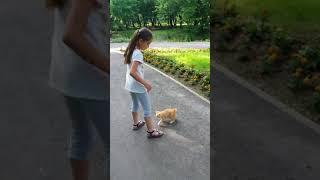 Funny Cats Video!!! Как выгуливать кота !!!! How to train a cat !!!