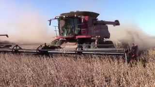 3 case ih 8230 axial flow combines harvesting soybeans