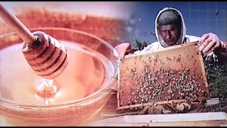 Bajban vannak a magyar méhészek