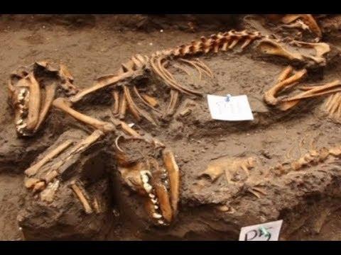 Situs Kuburan Anjing Aztek Kuno Diketemukan Di Kota Meksiko.