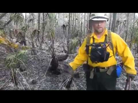 Peat FireX Training - Bureau of Land Management, Florida