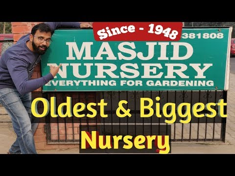 Oldest & The Biggest Nursery Of Delhi | 75-year-Old Plant Nursery | Indoor Outdoor Plants