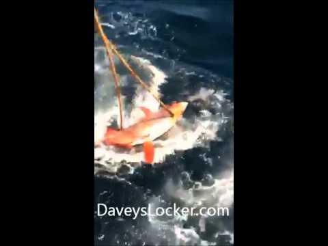 Rare opah caught daveys locker newport beach 05012013 for Davey s locker fish report