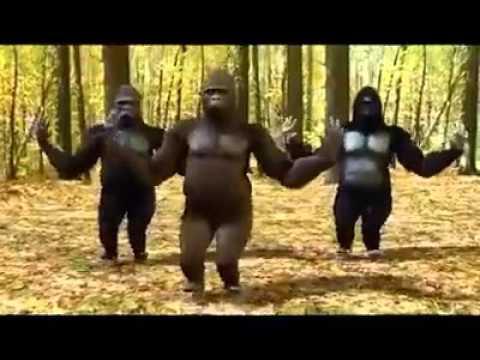 Chimpanzee Version of Prem Ratan Dhan Payo