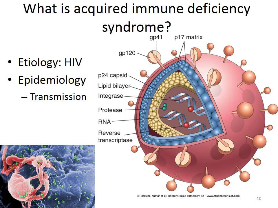 an introduction to the issue of aids acquired immune deficiency syndrome Introduction survival of patients immunodeficiency virus/acquired immune deficiency syndrome (hiv regarding this issue, 41–43 and possibly it can be.