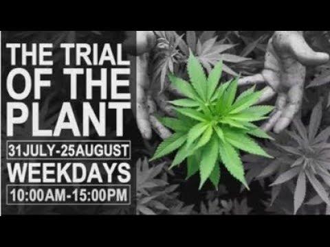 Dagga Trial, 17 August 2017