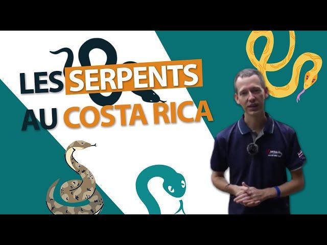 Les serpents au Costa Rica : sont-ils dangereux ?