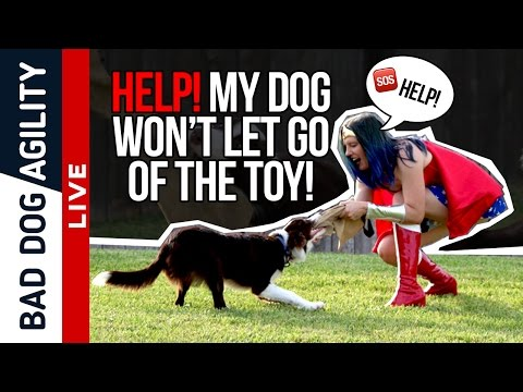 Help! My dog won't let go of the toy!