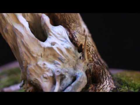 Martin (Pingo de Ouro) vídeo 5