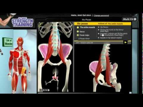 How Iliopsoas Muscles Work: 3D Anatomy of Muscles in Motion