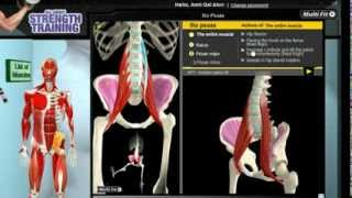 Video How Iliopsoas Muscles Work: 3D Anatomy of Muscles in Motion download MP3, 3GP, MP4, WEBM, AVI, FLV Juli 2018