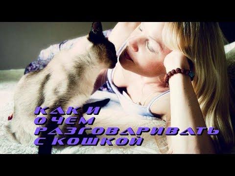 Как и о чем разговаривать с кошкой