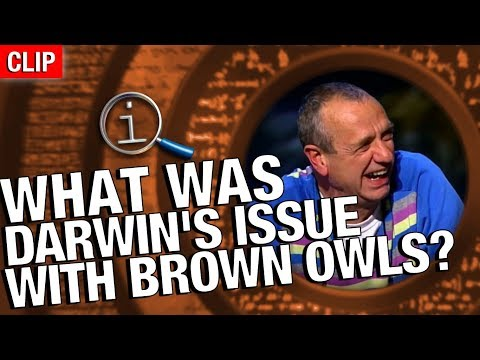 QI | What Was Darwin's Problem With Brown Owl?