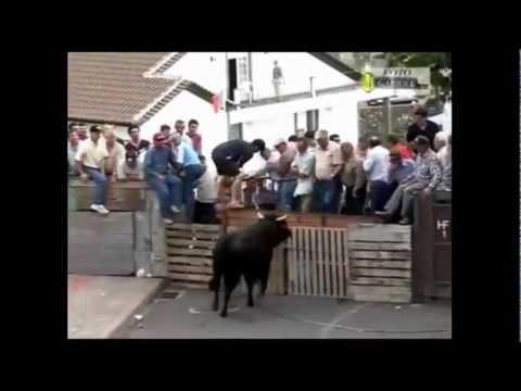 Bulls Demolishing People