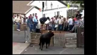 Bulls Demolishing People