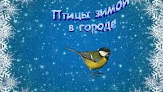 Зима и птицы. Мои анимации птиц